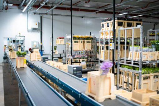 MHS automatisiert zentrales Distributionszentrum der Hoek Group